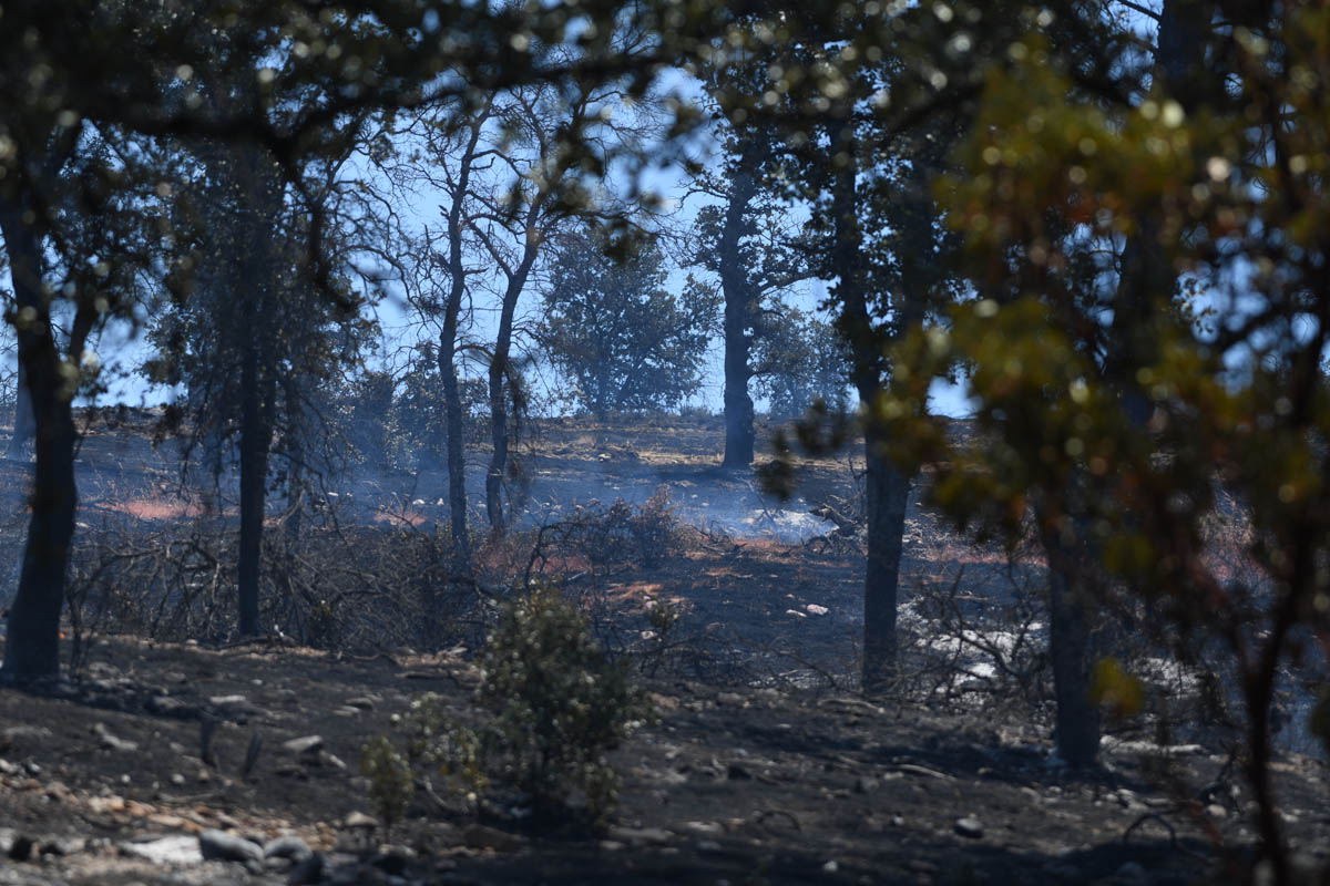 Creek fire 22